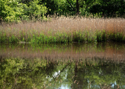 Jones River reflectios