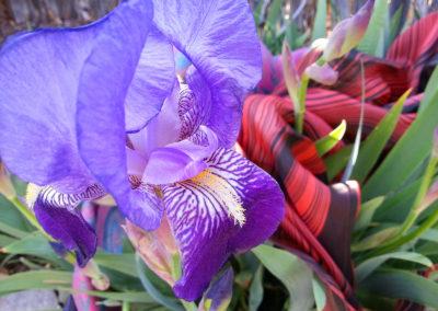 iris w scarves #2