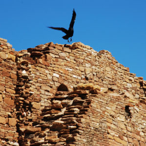 New Mexico: Chaco Canyon photograph raven in flight